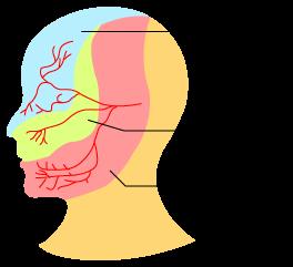 顔面神経痛(三叉神経痛)